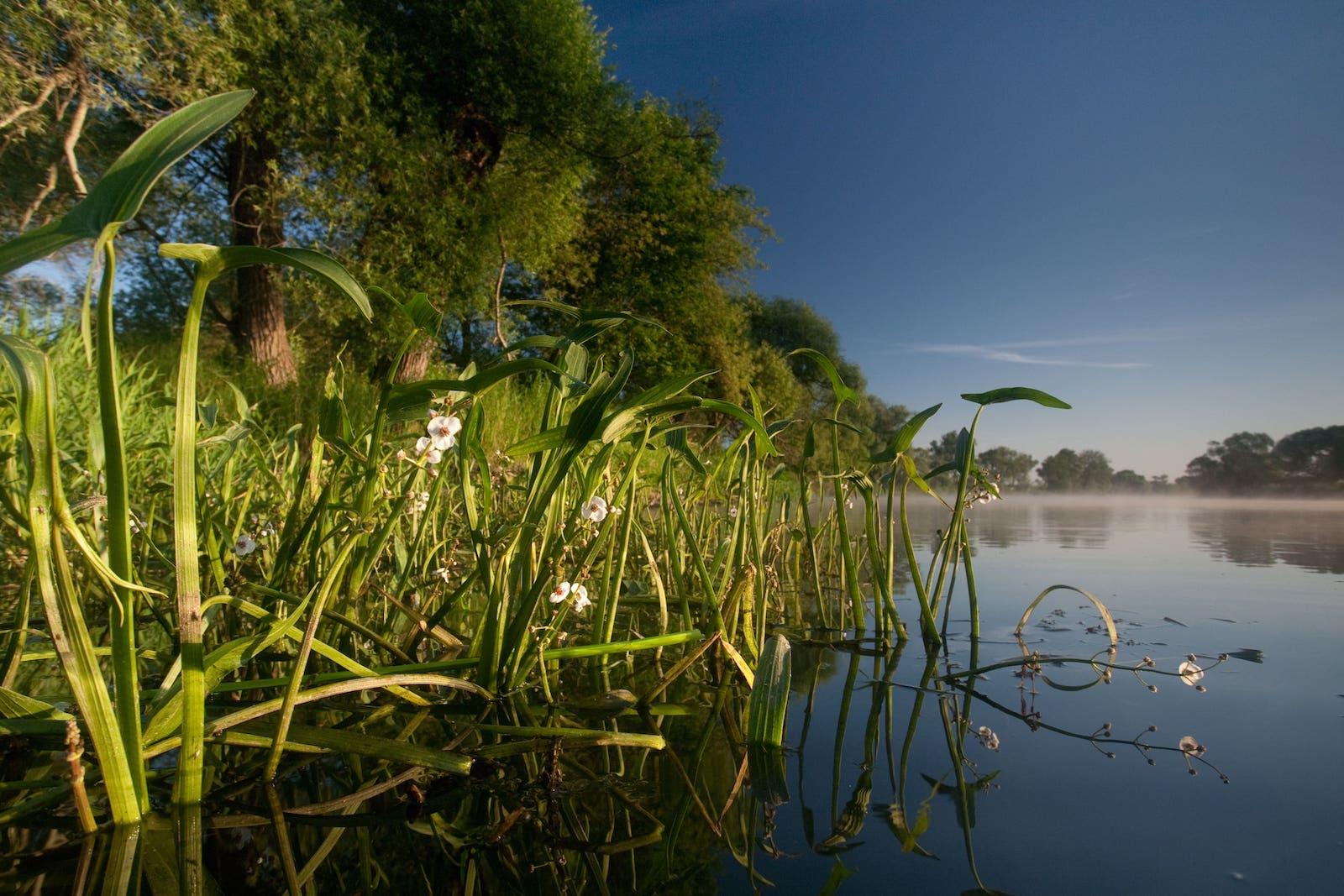 River renaturation with NABU